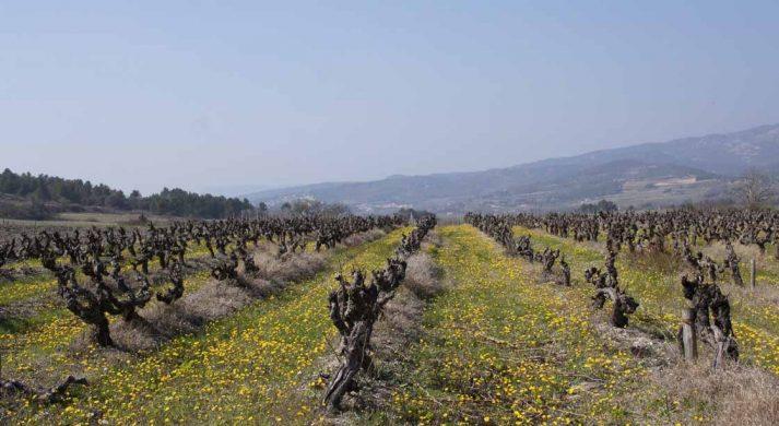 Anne Pichon Wines
