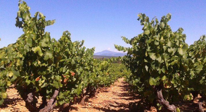 Clovis Wines