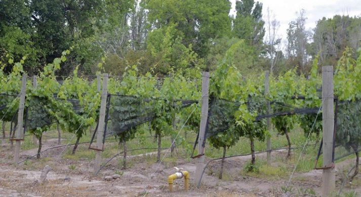 Bodegas Luminis / Allamand Wines