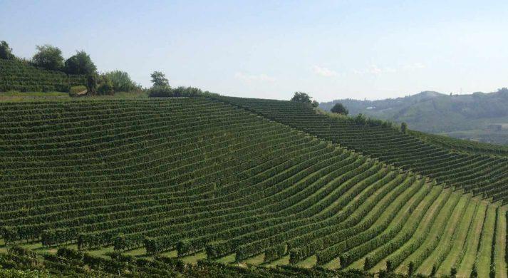 Azienda Agricola Davide Carlone