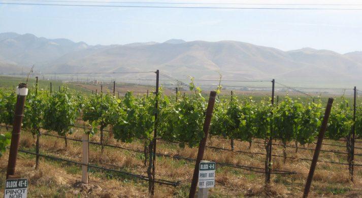 Dierberg Wines