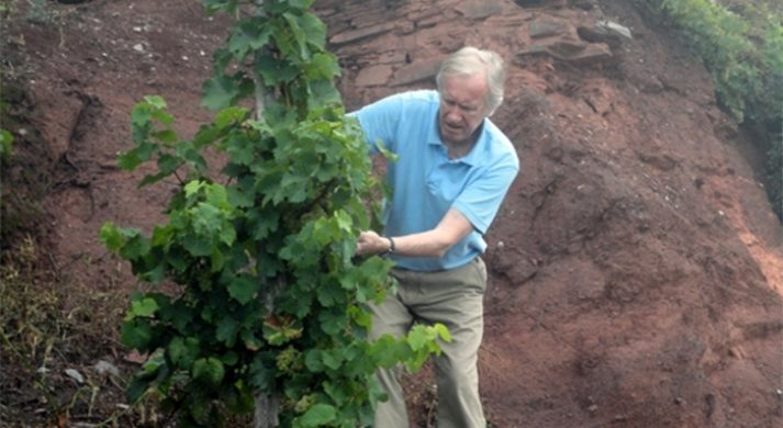 Weinbau Dr. Lippold