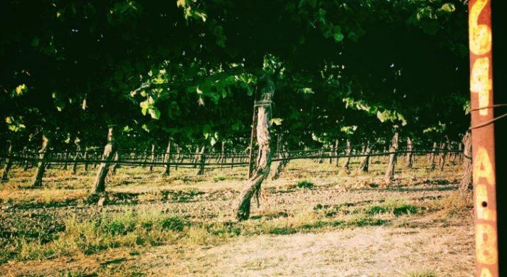 Bench Chardonnay Sonoma County