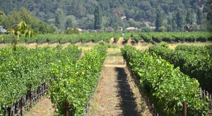 Norton Ridge Wine Company