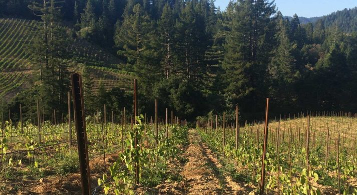 Porter-Bass Winery and Poco a Poco
