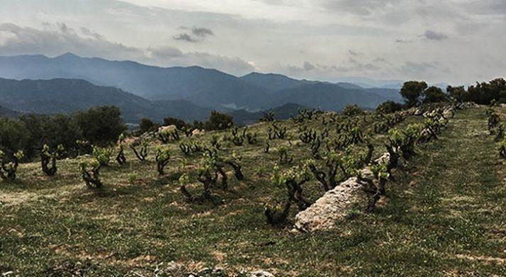 SiurAlta & InStabile / VinsNus by Alfredo Arribas