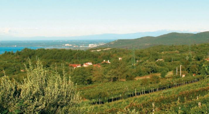 Azienda Agricola Skerk