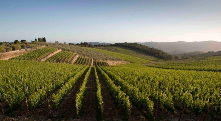 Bodan Roan Wines