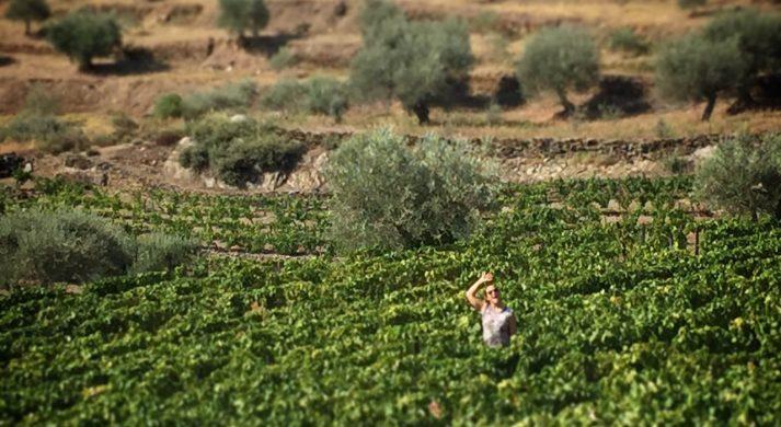 Wine Drops LDA, SØMNIUM