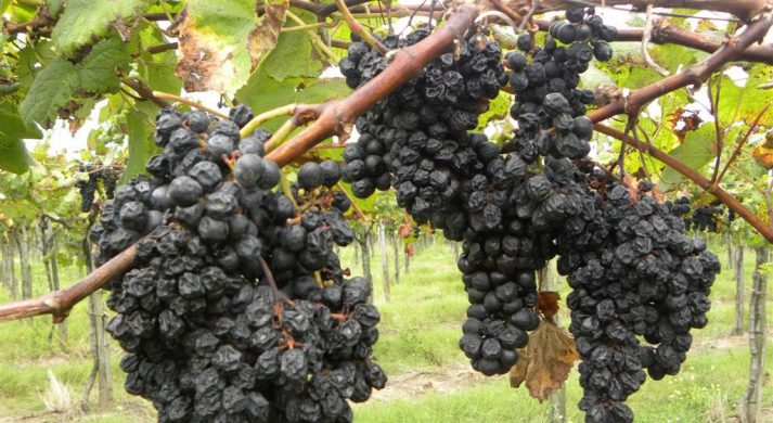 Vinedo de los Vientos