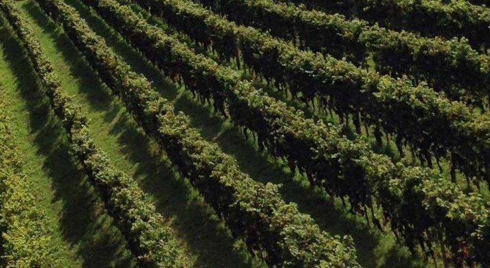 Manta Wines